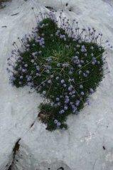 Blume10.jpg