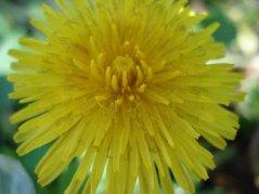 Blume4.jpg