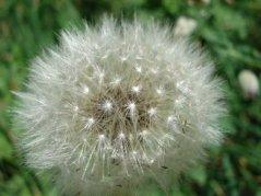 Blume5.jpg