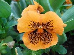 Blume6.jpg