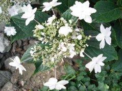 Blume7.jpg