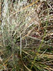 Spinnennetz1.jpg